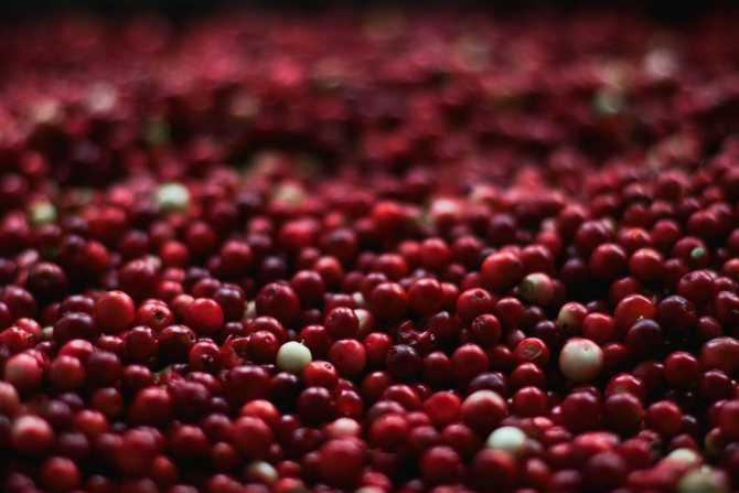 Клюква в сахаре (без сырого яичного белка) - пошаговый рецепт с фото на сайте банк поваров