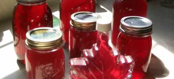 Ягоды санберри: полезные свойства и противопоказания, применение в народной медицине, рецепты приготовления варенья