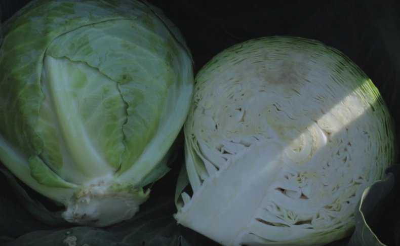 Как солить в пластиковом ведре капусту кусками