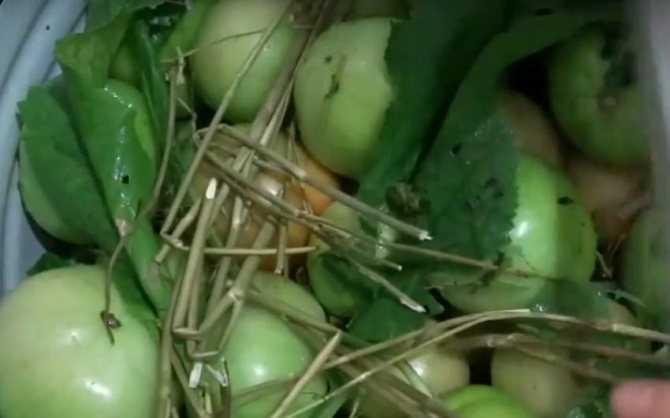 Как солить помидоры на зиму в банках 1 и 3 литра: простые рецепты