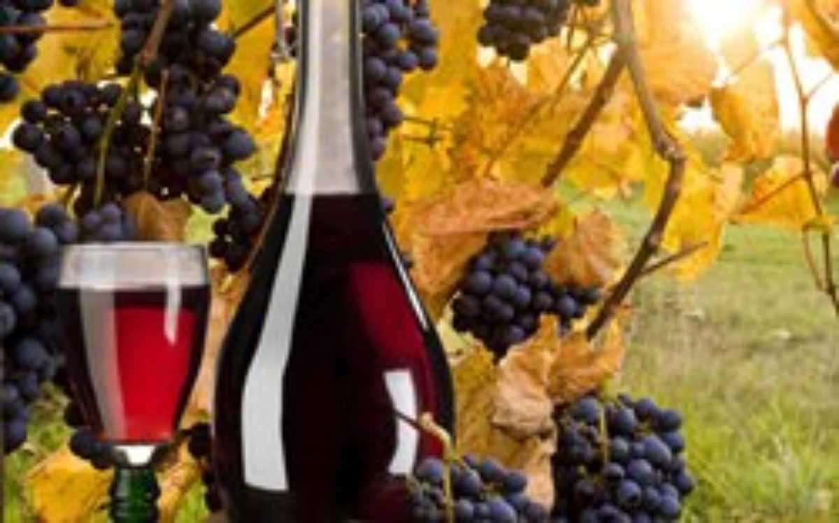Как приготовить вино из винограда изабелла в домашних условиях