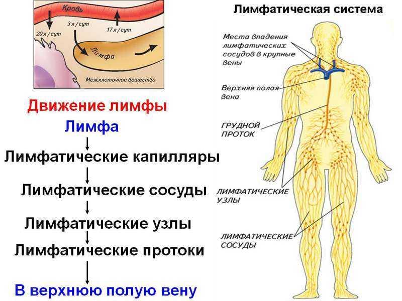 Вода с лимоном для похудения: полезные рецепты - allslim.ru