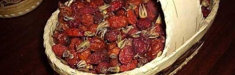 Сушка шиповника в духовке в домашних условиях гарантированно сохранит полезные свойства ягоды
