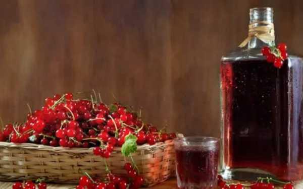 Вино из смородины, простой рецепт домашнего вина пошагово