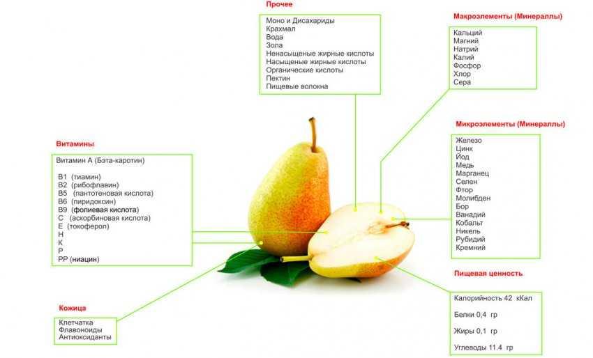 Калорийность груши, содержание белков, жиров, углеводов, польза и вред для организма