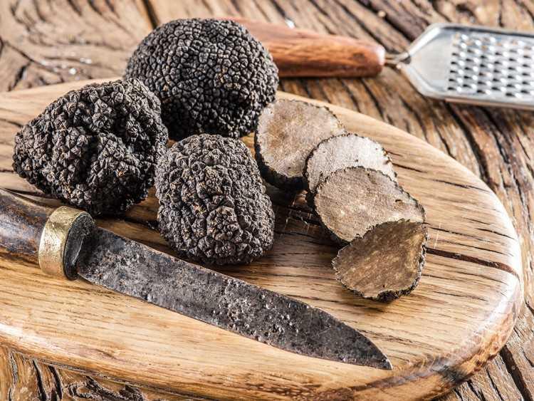 Каков на вкус трюфель – самый дорогой гриб в мире | говорю как есть
