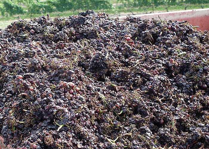 Чача из винограда в домашних условиях: рецепт самогона из жмыха (мезги) изабеллы