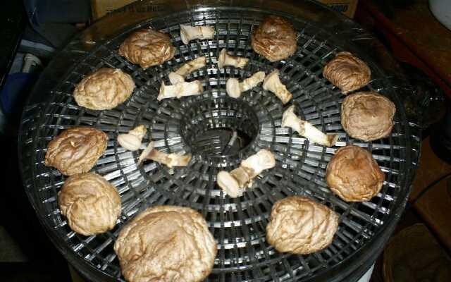 Как сушить вешенки на зиму: 7 легких способов, подготовка грибов, нарезка, процесс вяления или сушки