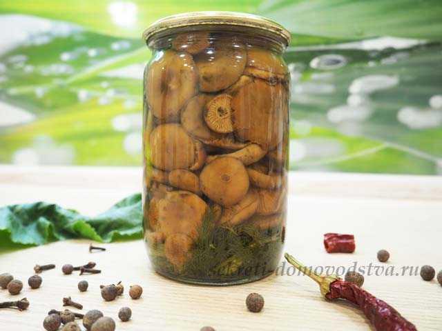 Рыжики на зиму: 13 домашних вкусных рецептов приготовления