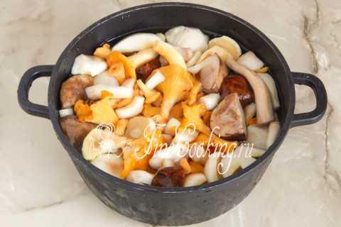 Избранные рецепты приготовления грибов рыжиков