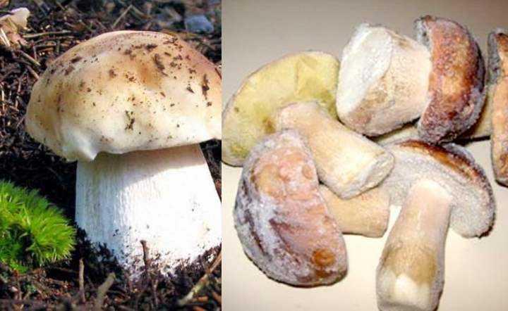 Что приготовить из сушеных грибов? 4 самых вкусных рецепта