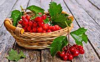 Настойка из калины: рецепты приготовления в домашних условиях