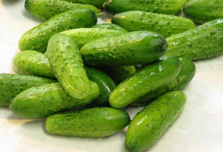 Хрустящие малосольные огурцы - рецепты засола горячим способом