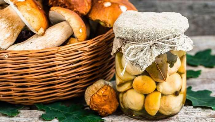 Засолка волнушек горячим способом: пошаговые рецепты с фото