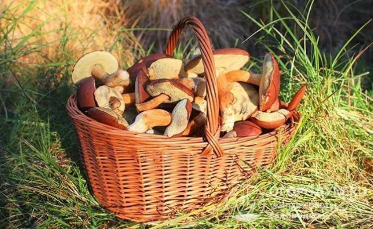 Как и сколько можно хранить грибы в холодильнике: свежие, вареные