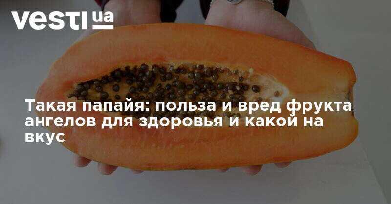 Калорийность, полезные свойства и вред папайи