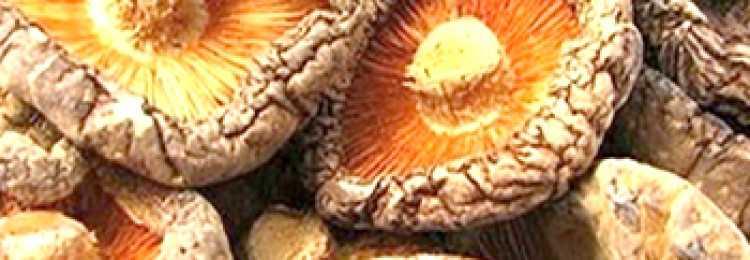 Как сушить белые грибы: можно ли в электросушилке, сколько хранятся