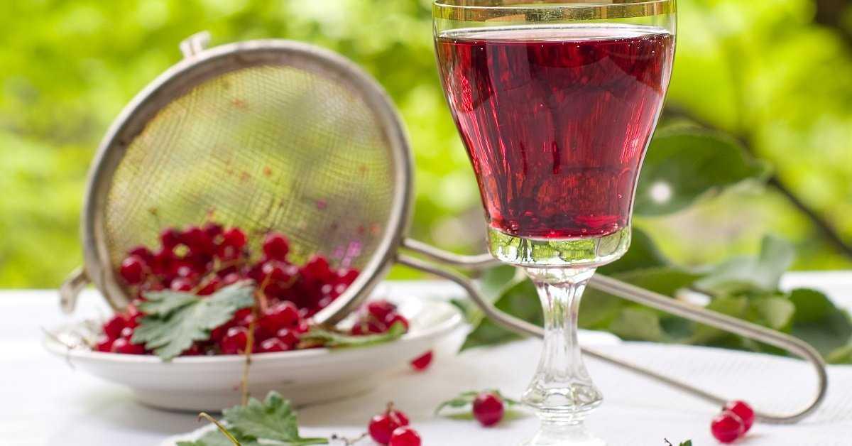 Вино из черной смородины: рецепты, секреты, хитрости приготовления