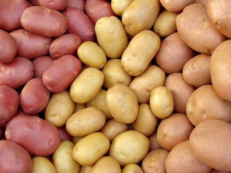 Как пожарить опята с картошкой на сковороде — 7 рецептов жареных грибов