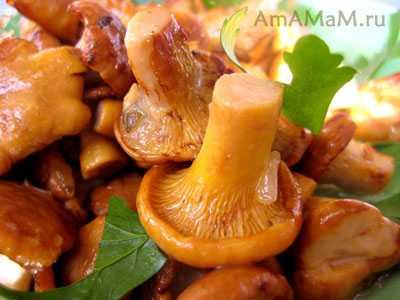 Грибы жареные с луком – просто и вкусно, быстро и красиво! подборка популярных рецептов жареных грибов с луком