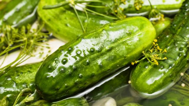 Малосольные огурцы в рассоле – рецепты быстрого приготовления