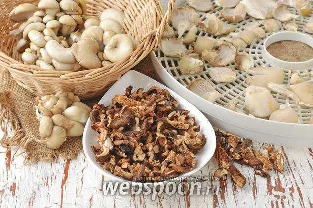 Сушеные вешенки на зиму: правила подготовки и приготовления. Сушка грибов на воздухе, в духовке, электросушилке. Правила и сроки хранения.