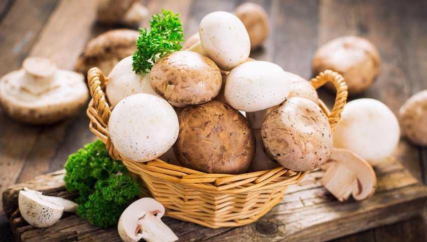 Грибы шампиньоны в кляре: как готовить на сковороде и во фритюре, рецепты с фото