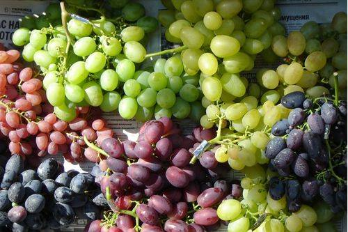 Домашнее вино из винограда — 15 домашних вкусных рецептов приготовления
