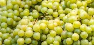Розовое вино: история, технологии приготовления и какой виноград нужен для хорошего вина