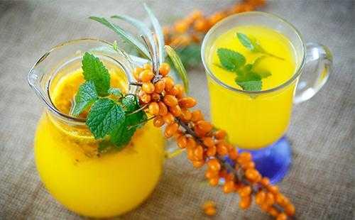 Облепиха - фото, описание, свойства ягод, польза и вред для организма, состав, калорийность, рецепты приготовления