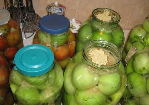 Засолка зеленых помидоров в ведре холодным способом: лучшие рецепты приготовления соленых томатов, правила хранения и полезные советы
