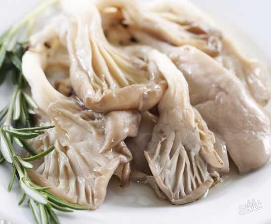 Замороженные вешенки как готовить- рецепт пошаговый с фото