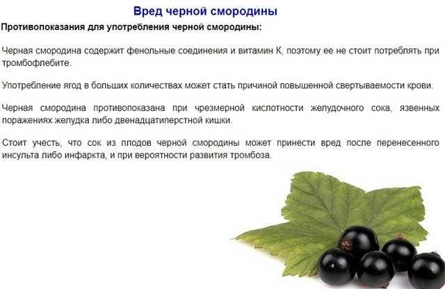 Любителям домашнего алкоголя на заметку: настойка на смородине и секреты ее приготовления