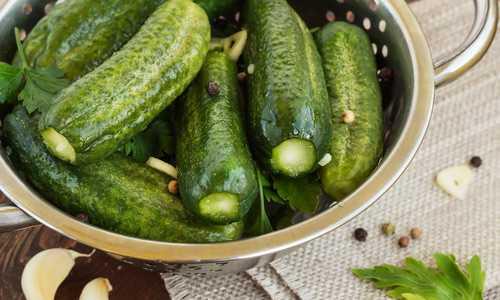 Рецепты малосольных огурцов быстрого приготовления. 5 подробных простых рецептов
