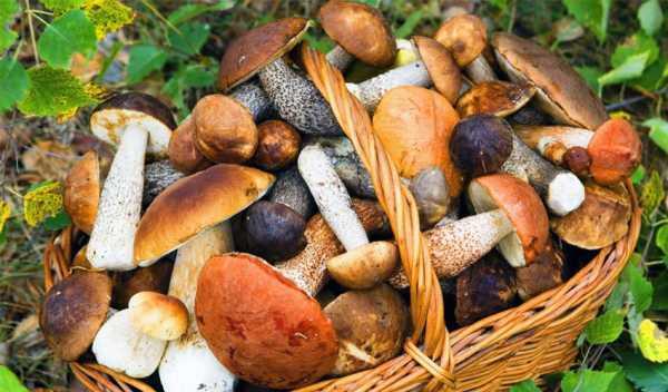 Как заморозить белые грибы на зиму и использовать после замораживания