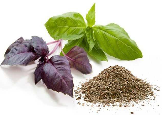 Можно ли сушить базилик, как правильно собирать и сушить, какими полезными свойствами обладает сушеный базилик. Способы сушки в домашних условиях, условия хранения.