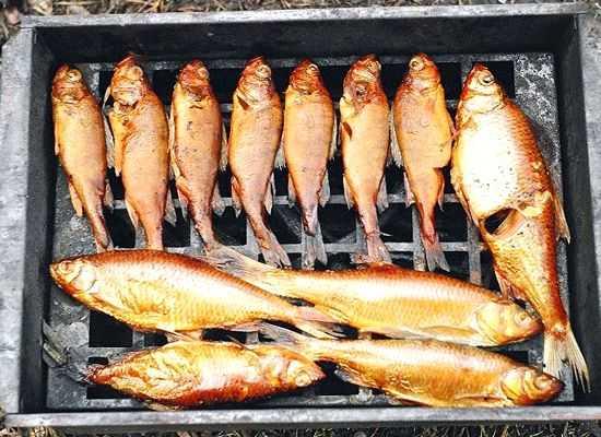 Как коптить рыбу горячего копчения: подготовка продукта, выбор сырья и коптильни