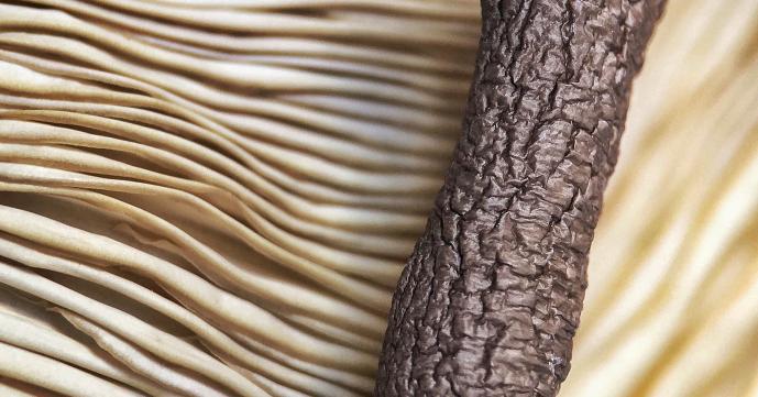 Как сушить грибы - в духовке, на нитке, микроволновке, электросушилке