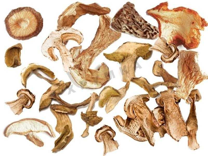 Как правильно сушить грибы в домашних условиях: варианты сушки