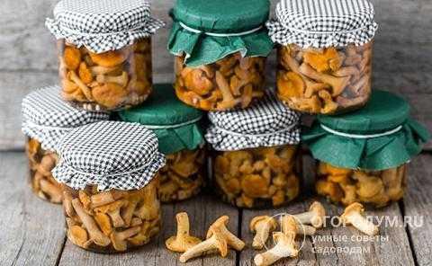 Как солить волнушки на зиму: рецепты в домашних условиях. соленые волнушки в банках (+отзывы)
