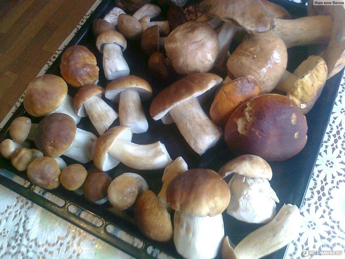 Можно ли замариновать замороженные белые грибы. как приготовить маринованные лесные грибы без закрутки, рецепт с фото. видео: маринование белых грибов в домашних условиях