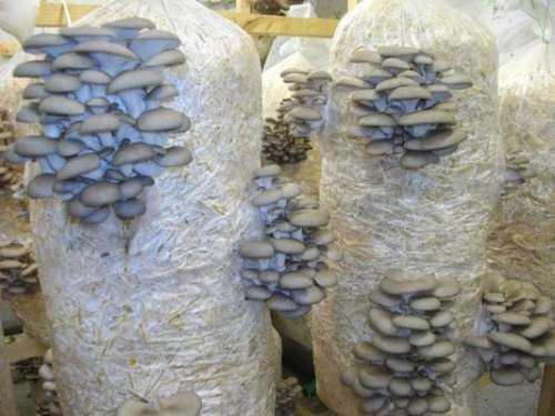 Как сушить грибы - самые лучшие способы сушки в домашних условиях