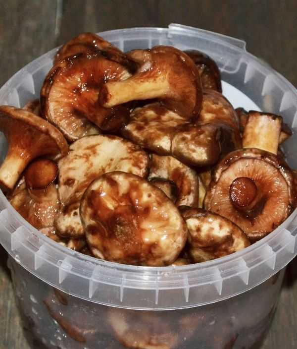 Икра из грибов – 9 лучших рецептов с фото грибной икры