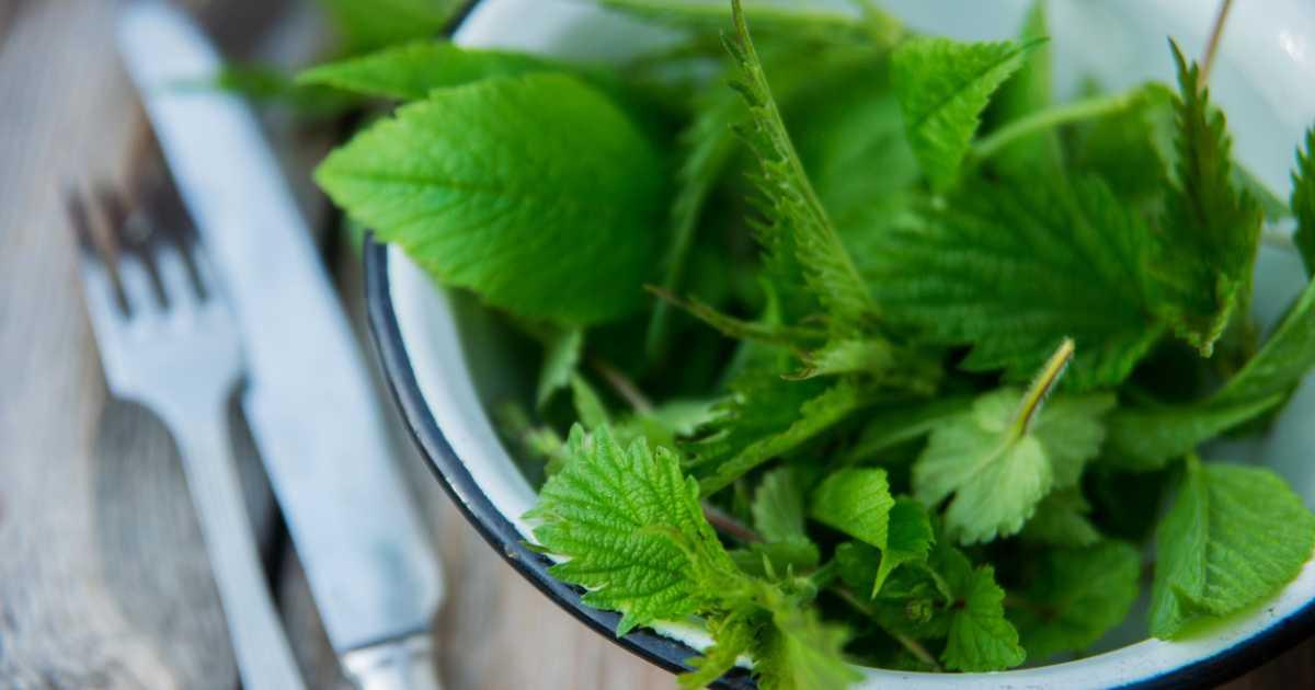 Салат с вермишелью быстрого приготовления. простые салаты на скорую руку - рецепты