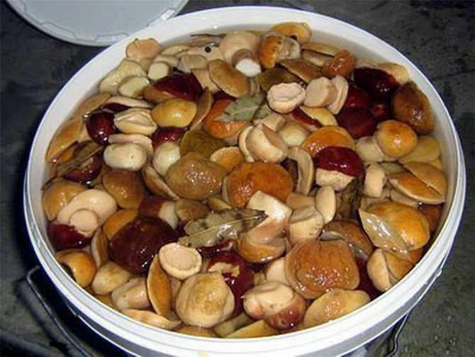 Как правильно солить белые грибы: 11 лучших рецептов. Подготовка боровиков к засолке. Сроки и условия хранения. Советы и рекомендации.