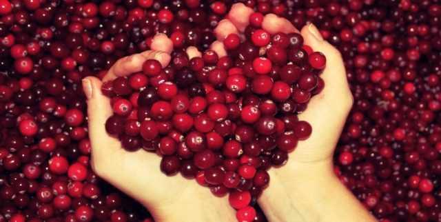 Как заморозить ягоды на зиму: правильная технология заморозки