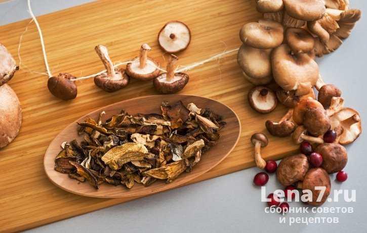 Как хранить сушеные грибы в домашних условиях, чтобы не испортились