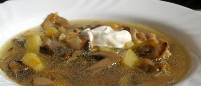 Суп из подберезовиков | рецепты из свежих, замороженых и сушеных грибов