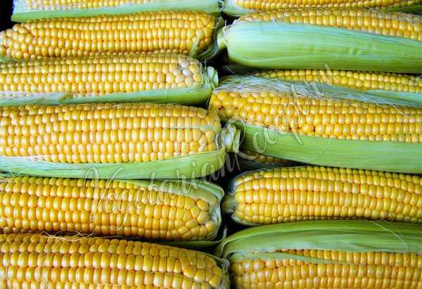 Как заморозить овощи на зиму свежими в морозилке? [2018]