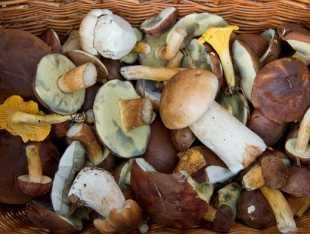 Грибы белянки что с ними делать. как солить грибы: пошаговые рецепты и советы